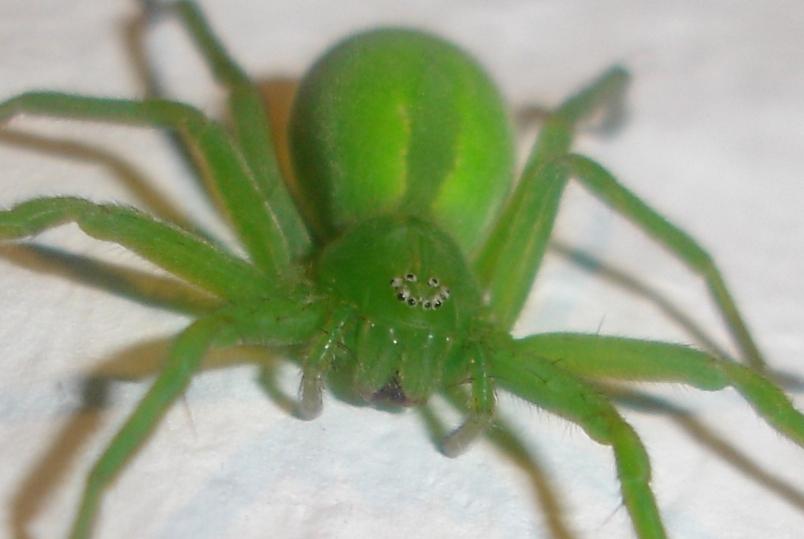 Veel spinnen en hooiwagens